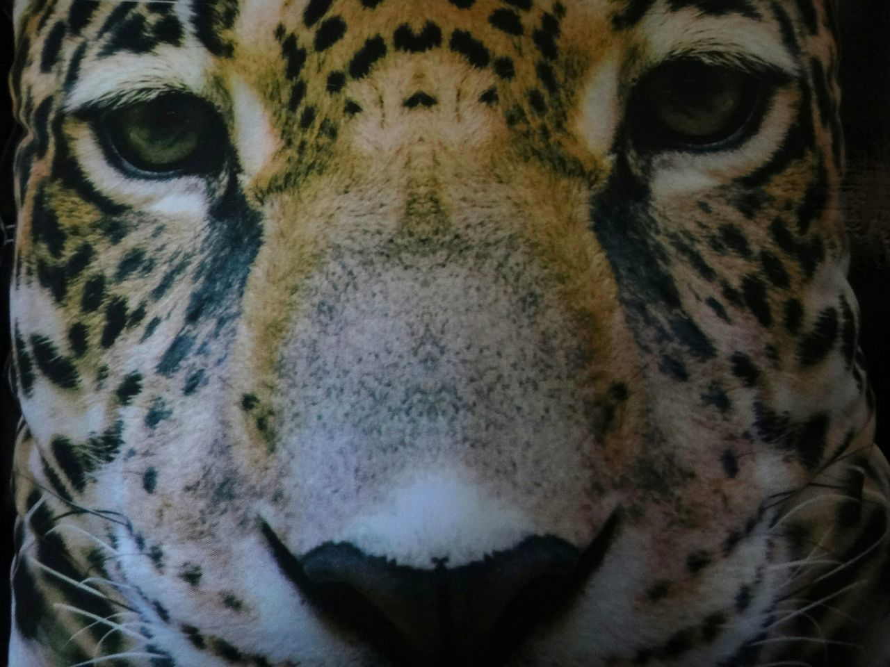 animal themes, one animal, animal, mammal, feline, big cat, cat, animal wildlife, close-up, animals in the wild, portrait, animal body part, looking at camera, animal head, no people, vertebrate, front view, carnivora, tiger, whisker, animal eye, aggression, undomesticated cat, snout