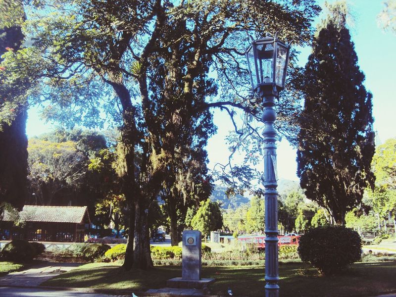 Tree Growth No People Outdoors Sky Day Parks And Recreation Narnia...?!?.. Narnia On My Mind Narnia  Lamp Post Lamp Nature Tranquil Scene Outdoors Lamppost The City Light EyeEmNewHere Park Tranquil Scene Beauty In Nature