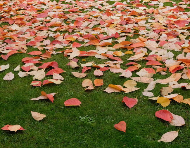 Autumn Colors Autumn Leaves Nature Photography Autumn🍁🍁🍁 Beauty In Nature Field Fragility Leaf Nature_collection Nopeople Outdoor Photography