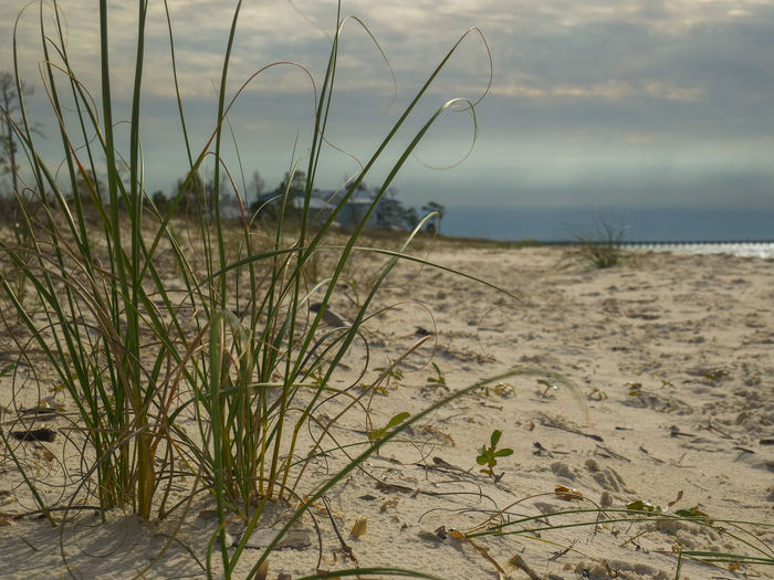 Grass growing on beach against sky