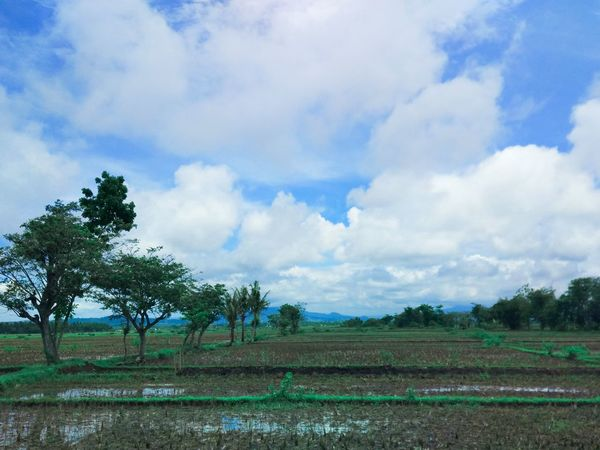 Sky Agriculture Cloud - Sky Tree Field Sky Nature Landscape Growth Rural Scene Beauty In Nature Rice Paddy No People Cafe Culture Wood - Material Water_collection Connected By Travel Water Reflection Waterdrops Sand High Angle View Cafesbenyedderlandscape Outdoors Day Scenics Irrigation Equipment