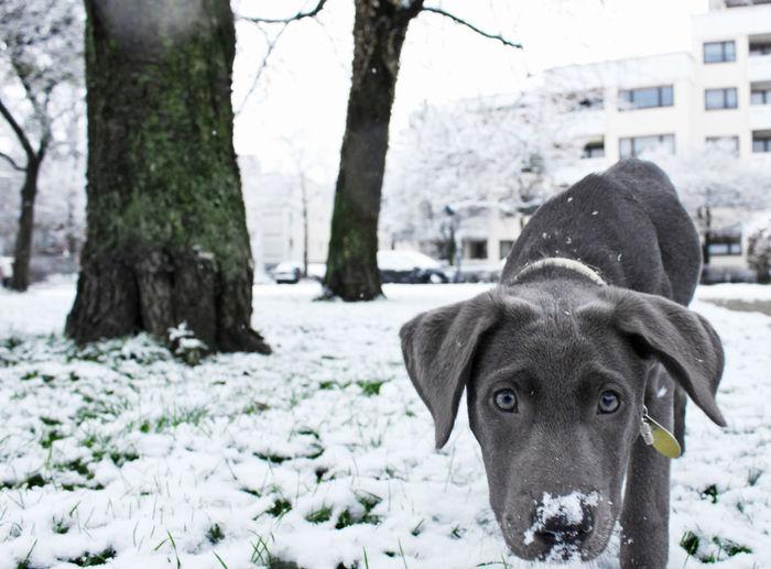 Animal Animal Head  Dog Doglife DogLove Findfrieda It's Cold Outside Outdoor Pets Puppy Roamingfrieda Snow Winter Dognose GrowingUp Outdoors Hello Hello World