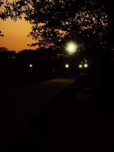 #Evening Tree Night Illuminated Plant Street Silhouette Sky