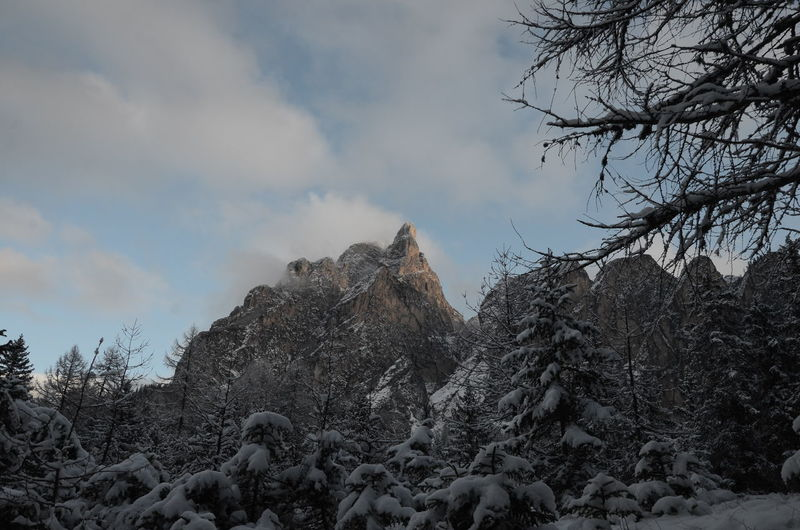 Low angle view of snow covered pine trees and mountains against sky