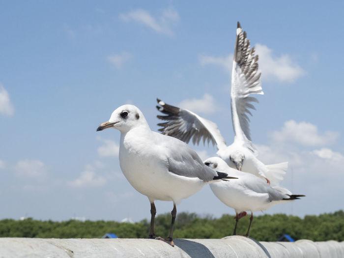 Bird Animals In