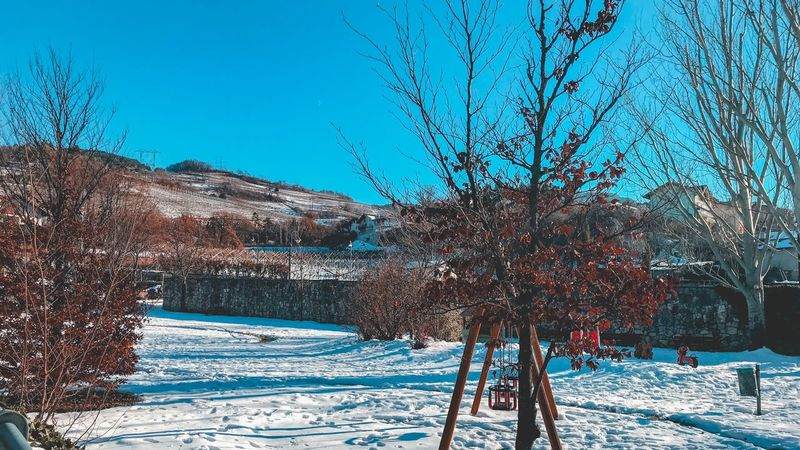 Cold Temperature Snow Winter Bare Tree Nature Weather Tree Frozen Beauty In Nature Outdoors Cold Tranquility Scenics Clear Sky Day Tranquil Scene Field No People Blue Landscape