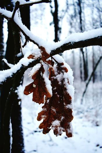 Close-up of frozen tree branch
