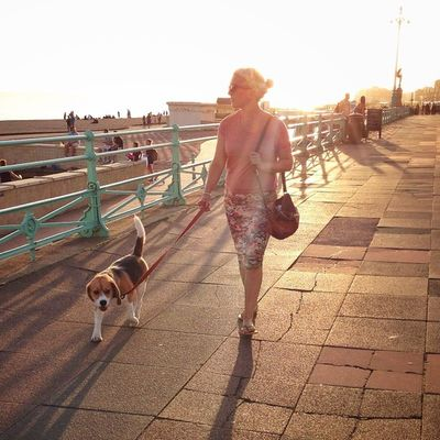 Dog walking in #Brighton ??☀️??? #sunset Mashpics Top_masters Sunset From_city Pro_shooters Alan_in_brighton Brighton Insta_brighton Igers_brighton Gang_family Allshots_ Gf_uk Gi_uk Ig_england Aauk Ic_cities_brighton Capture_today Loveyoursummer