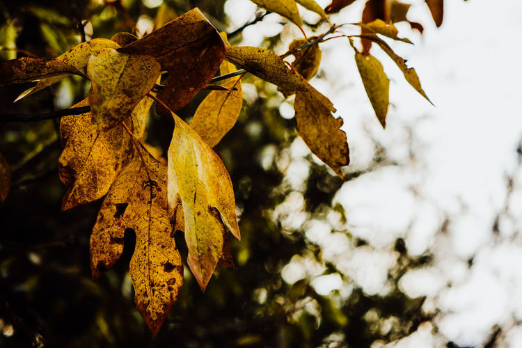 Plant Tree Focus On Foreground Plant Part Leaf Close-up No People Growth Branch Nature Day Outdoors Beauty In Nature Selective Focus Vulnerability  Fragility Low Angle View Leaves Change Autumn Natural Condition