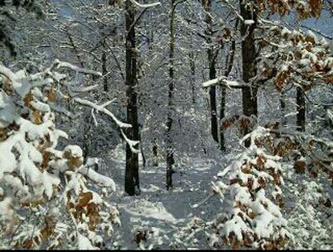 Texas Snow Texas Snow Texas Winter