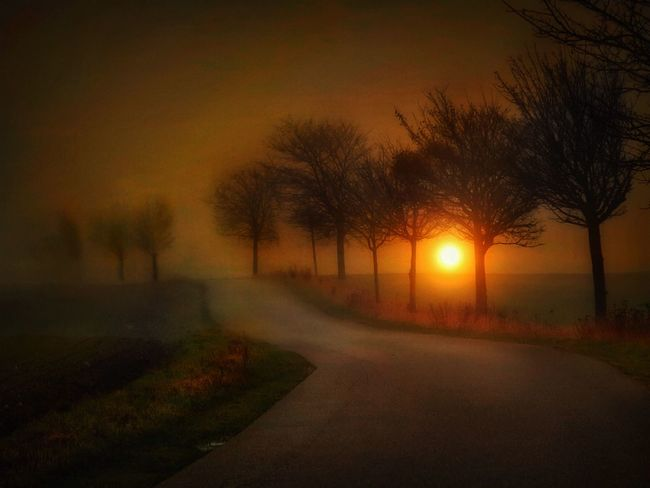 Fog Foggy Mist Sunlight Landscape Nature Ruegen Beauty In Nature The Way Forward Road Nature Sunset Tree No People Outdoors Tranquil Scene Sky colours Bare Tree Long Goodbye
