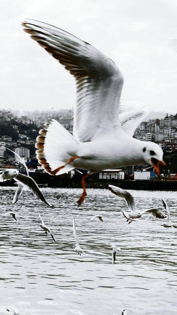First Eyeem Photo EyeEm Gallery Bysinaneksi Photography Hello World EyeEm Animal