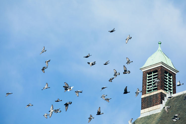 Low angle view of seagulls flying in building