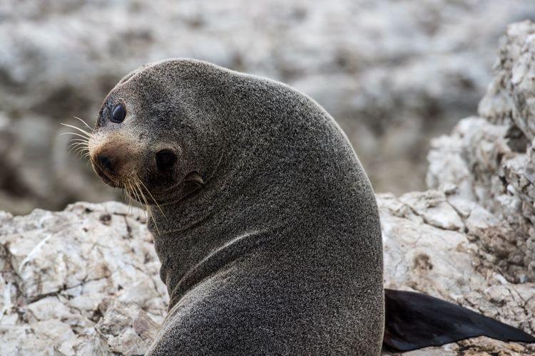 Close-up of seal