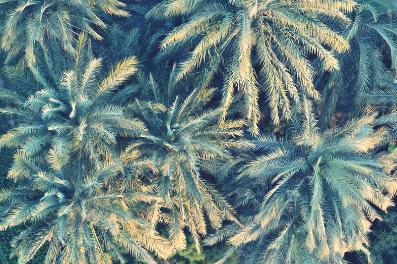 Pattern Pieces Wildlife Trees Palm Trees Wild Nature Pattern Nature Traveling Flying Balloons Green Leaves Turquoise Photooftheday EyeEm Best Shots Eye4photography  Hello World ✌