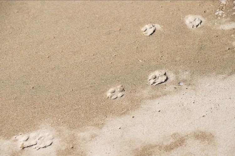 Japan Photography ASIA Asian  Dog Paw Dogs Dogs Of EyeEm Japan Japan Photography Meer Sea Wall Beach Breakwater Dog Hagi Ocean Pawprint Sea Summer
