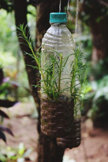 Close-up of plants in bottle hanging in yard