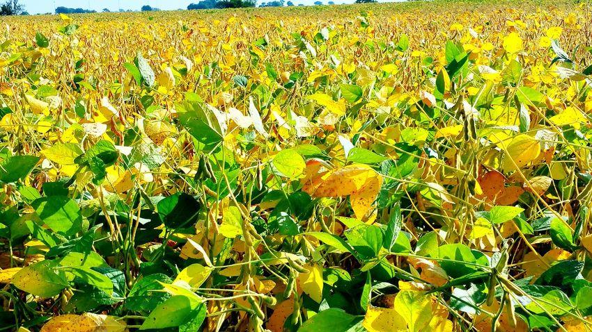 Agriculture Harvest Time