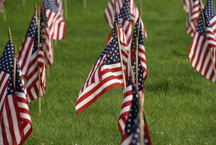 American flags in row on grassy land