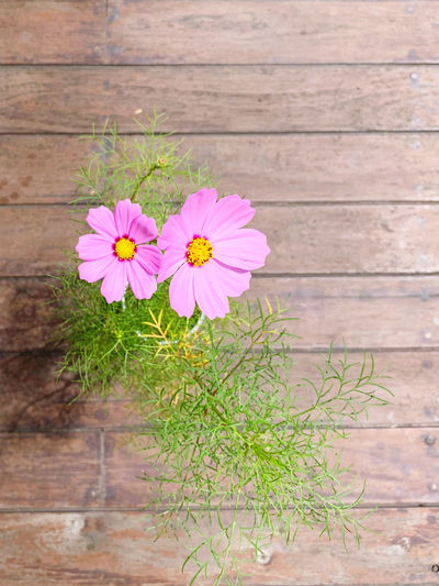 High angle view of pink flower on wood