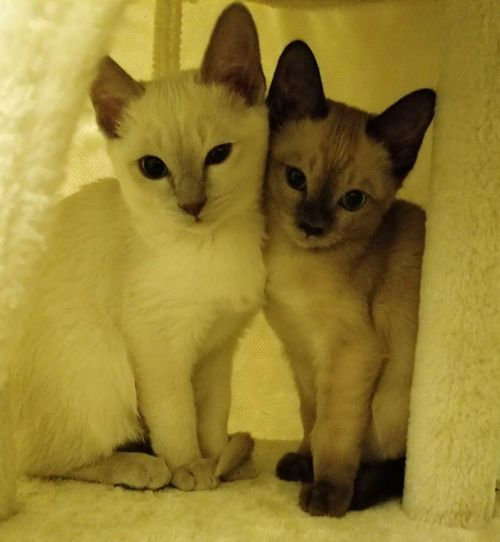 Portrait Friendship Togetherness Representing Looking At Camera Domestic Cat Close-up Kitten