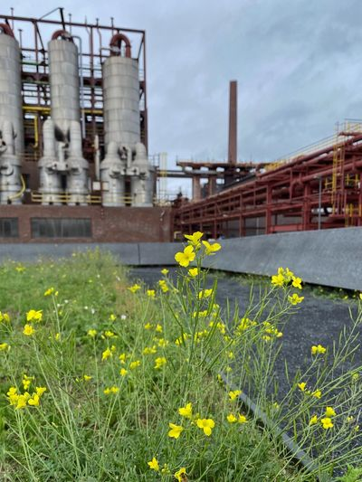 Yellow flowering plants by factory against sky