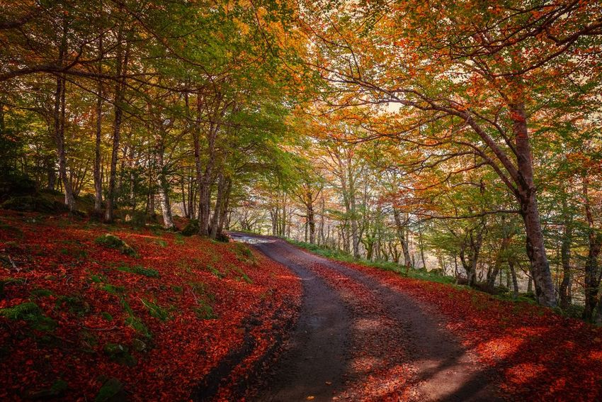 Autumn Tree Plant Beauty In Nature Change Nature Orange Color Red Tranquility Scenics - Nature No People Road Day Tranquil Scene Land Landscape