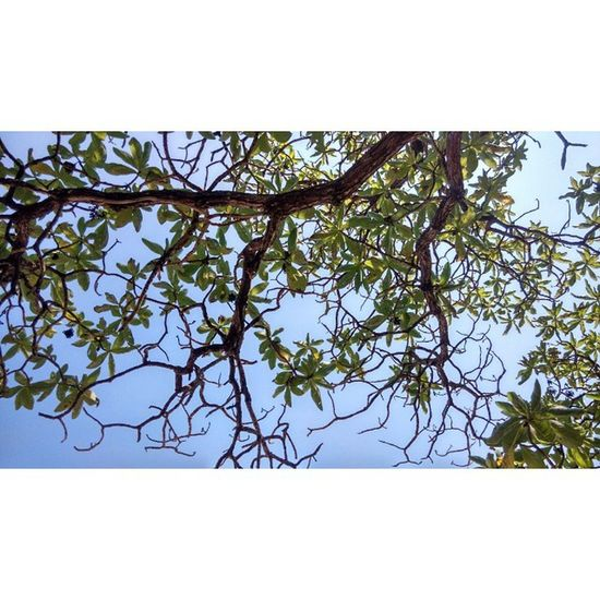 MERA//MBAT Magic Mangrove Kamboja Birdschirp Skydiver Feelingblues Naptime Onlyjust Smokethesea Sohigh Unexpected Pulaupenyu