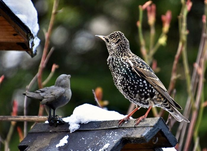 Der Star unter den Vögeln 👍🎉✨ Animal Themes Animal Bird Vertebrate Animal Wildlife Group Of Animals My Best Photo Two Animals Perching No People Nature Wood - Material Animals In The Wild Focus On Foreground Day Starling Outdoors White Color Animals In The Wild Nature Close-up Full Length