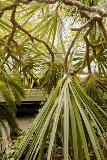 Plant Love - High Res Art Of Planting Beautiful Plant Beauty In Nature Branches California Plants Garden Garden Design Gardening Green Color Greenhouse Growth Leaf Lifestyle Lifestyle Photography Love Nature Mood Nature No People Organic Lifestyle Organic Structure Outdoors Plant Stylish Nature Tree Tropical Plants