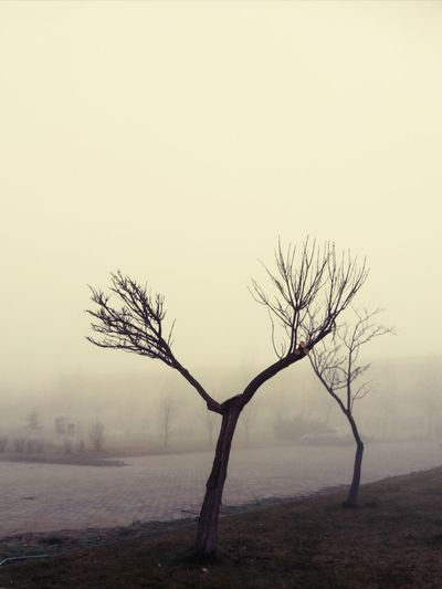 Ghosts/Hayaletler Fog Bare Tree Landscape Winter Cold Temperature Tree Beauty In Nature Outdoors Nature No People Day