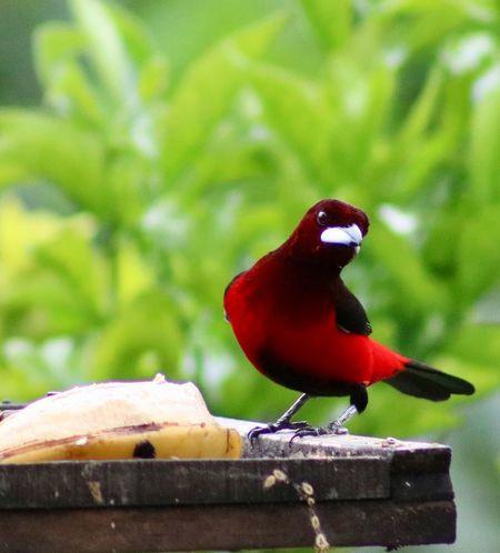 Animal Themes Bird Animal Animal Wildlife Animals In The Wild Vertebrate One Animal Food Nature No People