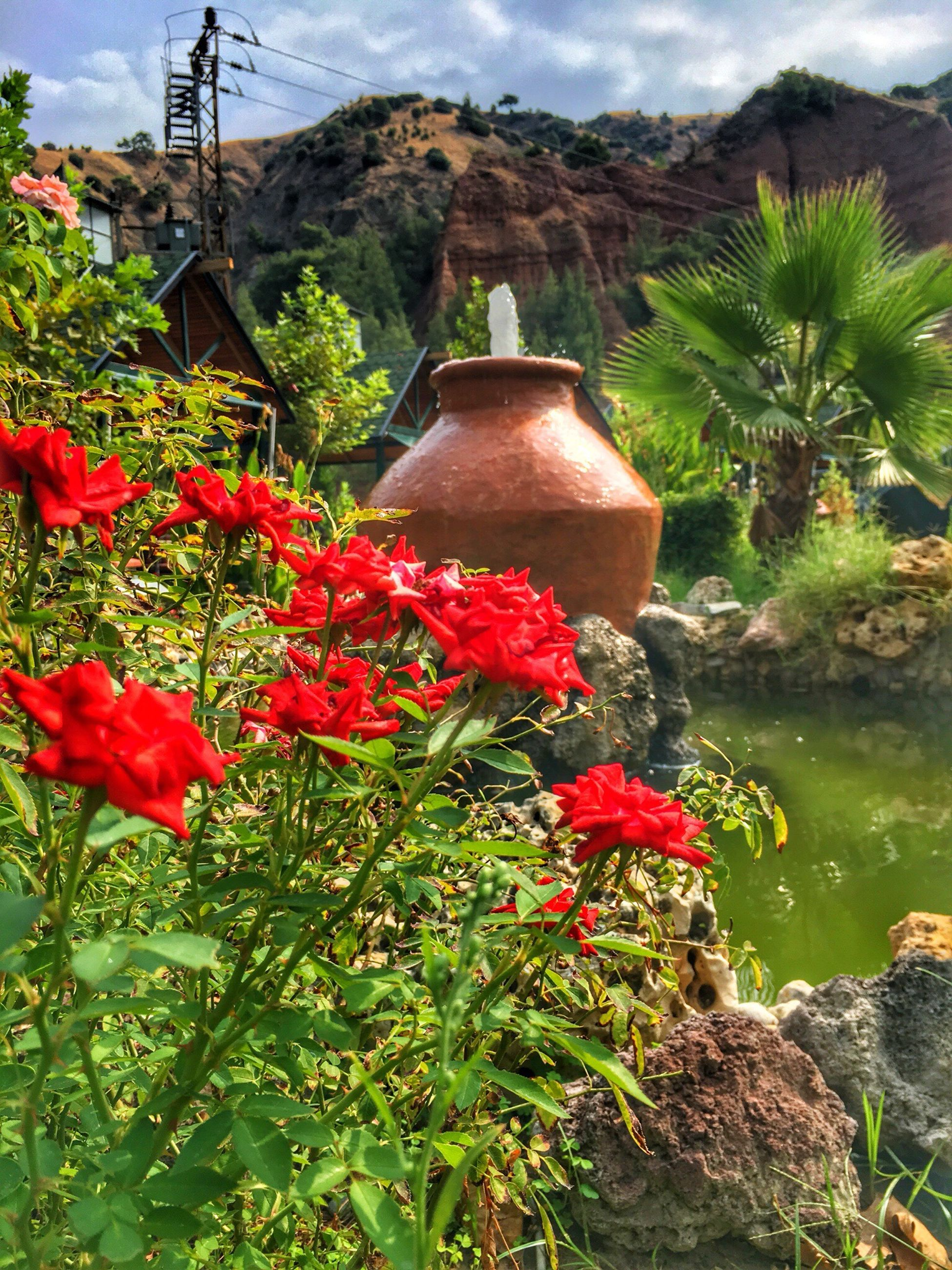 flower, beauty in nature, plant, growth, freshness, water, nature, scenics, red, fragility, tranquility, day, mountain, green color, vacations, tranquil scene, outdoors, vibrant color, in bloom, blossom, tourism, botany, tourist resort, rock formation
