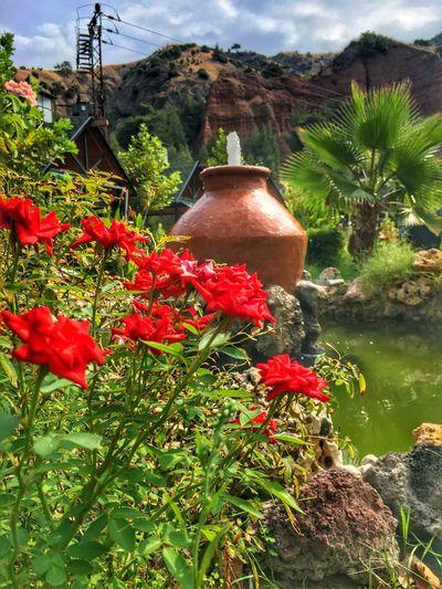 Salihli Red Roses Flower Mountain Green Color Botany