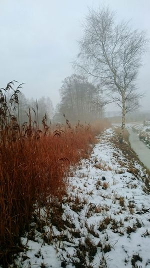 Winter Forest Wintersky Clouds And Sky From My Point Of View Work View Beautiful Surroundings Forest Snowy Winter Winter Trees Z3compact Taking Photos Hanging Out Fog In The Trees Fog Foggy Foggy Morning River Winter Field Landscapes With WhiteWall