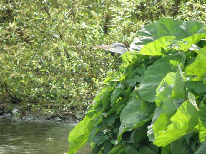 Bird Hidden Beauty In Nature Reiger