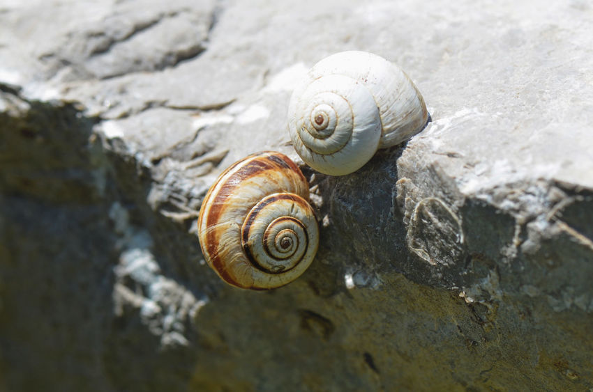 Two Snail Shells. Animal Antenna Animal Shell Animal Themes Background Backgrounds Beauty In Nature Close-up Focus On Foreground Natural Pattern Nature Nature Outdoors Selective Focus Shell Shells Slow Snail Snail Snails Textured  Textures And Surfaces Wildlife Wildlife & Nature