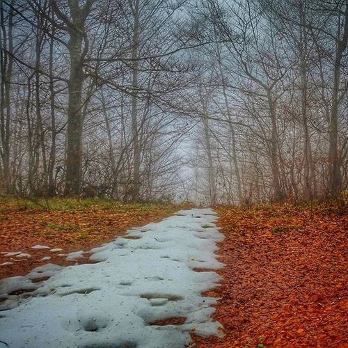 """Today in the woods at Prati della Regina, Subbiano, Tuscany, Italy. Snow is still up here, with the Wolves, and the """"Cacciatore"""" hunting wild Boar, are we mad? Pratidellaregina Subbiano Visitarezzo Italygram Tuscanypeople Tuscany Toscana Italia Italy"""