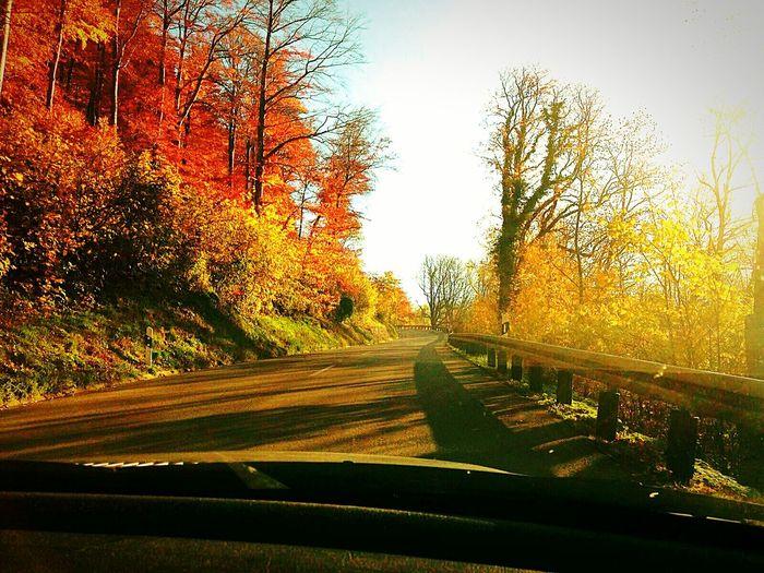 Schwäbische Alb Herbst Autumn Autumn Colours Found On The Roll