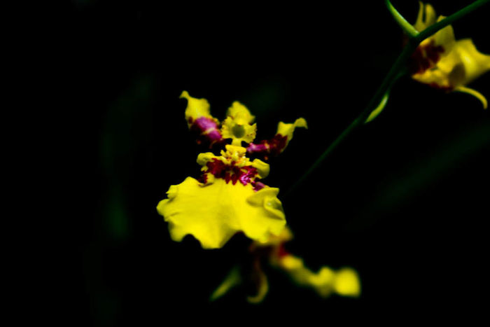 Fine Art Photography that lady is dancing in the dark... Fresh On Market July 2016 Eyeem Market Macro Macro_flower Macro Photography Macro Nature Close Up Photography Macro_flower Flower Flower Photography Nature Canonphotography Canon Showcase July