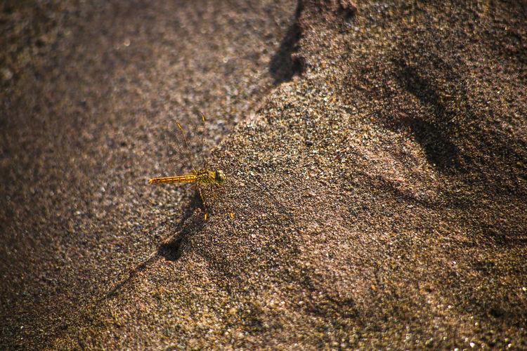 High angle view of a lizard on sand
