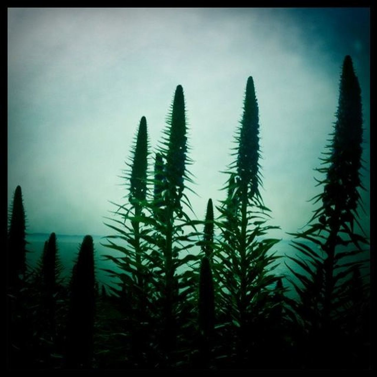 growth, nature, plant, no people, tranquility, tranquil scene, beauty in nature, outdoors, day, sky, freshness, close-up