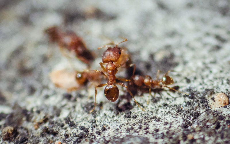 WeekOnEyeEm Animal Animal Body Part Animal Themes Animal Wildlife Animals In The Wild Ant Brown Close-up Day Insect Invertebrate Nature No People One Animal Outdoors Rock Rock - Object Selective Focus Solid Week On Eyeem Zoology