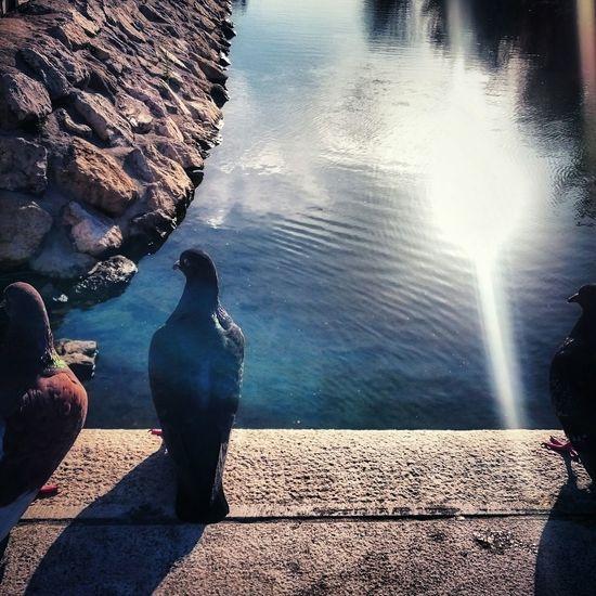 birds EyeEm