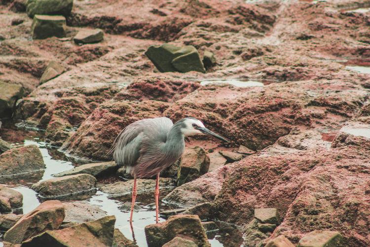 High angle view of bird on rock