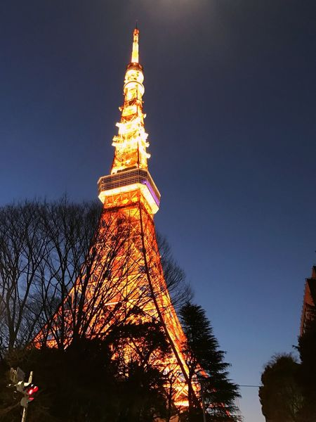 Tower Architecture Low Angle View Tree Built Structure Travel Destinations History Outdoors Sky Travel Building Exterior Illuminated Bare Tree No People Clear Sky City Day Nature Tokyo Tokyo Tower Tokyo Night Night Lights Nightphotography City Lights