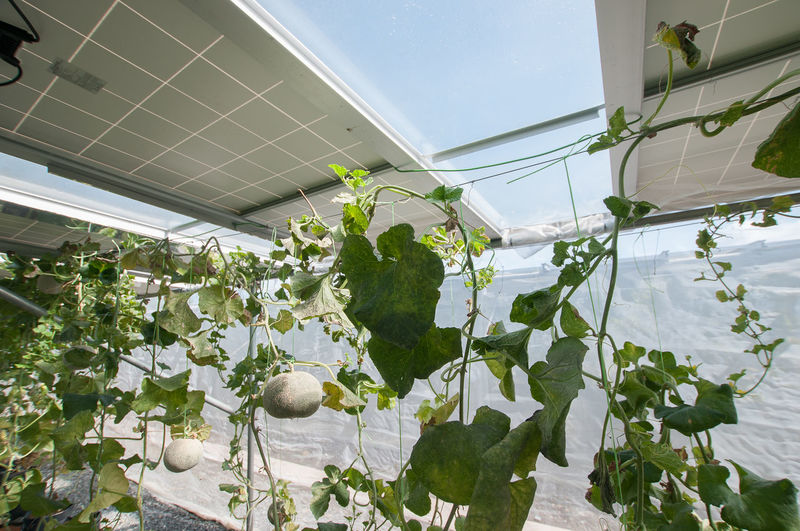 a farm inside the solar greenhouse Agriculture Beauty In Nature Close-up Day Flower Freshness Greenhouse Growth Horizontal Indoors  Leaf Nature No People Plant Plant Nursery Renewable Energy Sapling Social Issues Solar Water