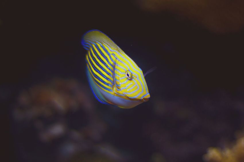 Vscocam Aquarium Lisboa