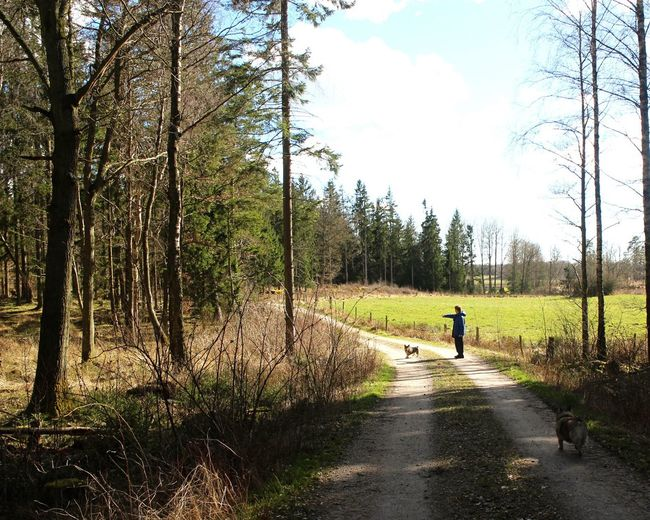 """""""Go get it"""" One Person Tree Walking The Way Forward Nature Real People Road Day Forest Leisure Activity Dog Outdoors Bare Tree"""