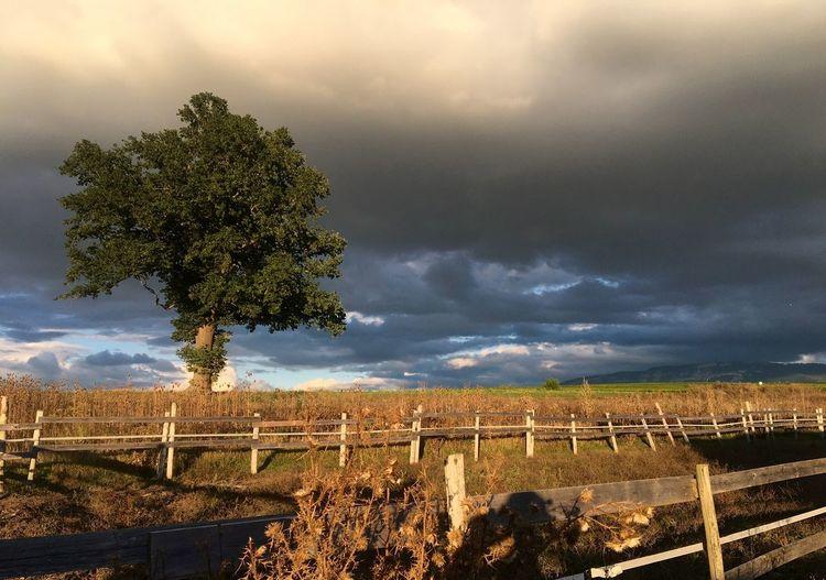 Farm Dark Sky Clouds Dark Clouds Tree Lonely Tree Moody Sky Sunlight Dramatic Sky Fences Wooden Fence Fields Fieldscape Fields And Sky The Week On EyeEm